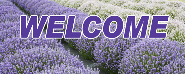 Welcome to Purple Ridge Lavender